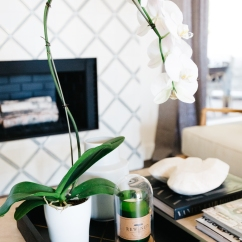 white orchid on a black tray natural colored wood coffee table